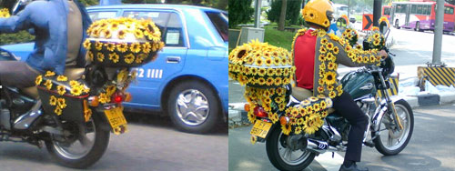 The sunflower biker in singapore