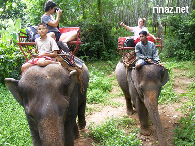 Rinaz Juli and Hema on an elephant ride in Krabi - Thailand