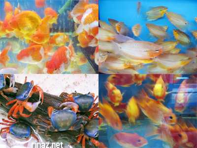 Qian Hu Fish Farm