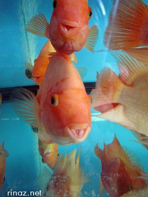 Fishes at Qian Hu Fish Farm