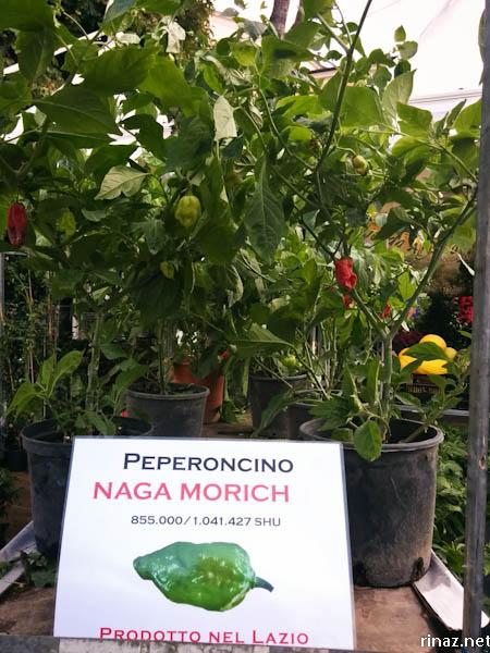 rinaz.net Chilli festival in Rieti