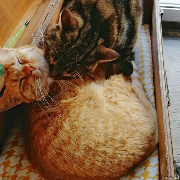 rinaz.net Romeow Cat Bistrot